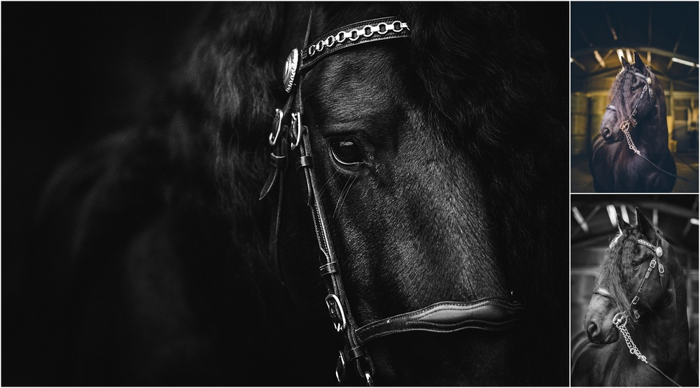 friesian stallion horse photographer kent