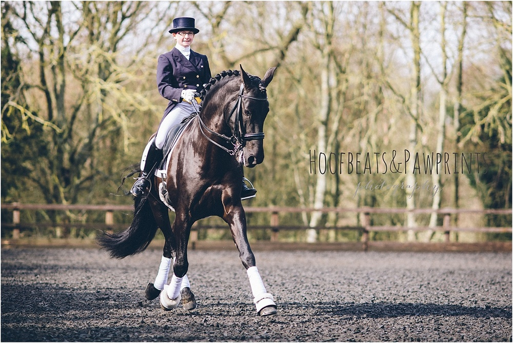 Prix St George dressage stallion