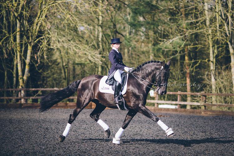 Iberian horse UK