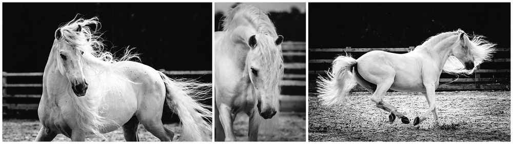 horse photographer in devon cornwall and somerset