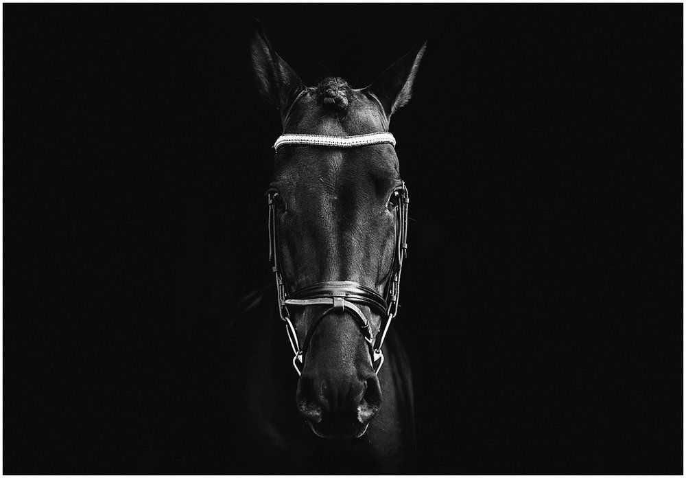 horse photographer in cornwall