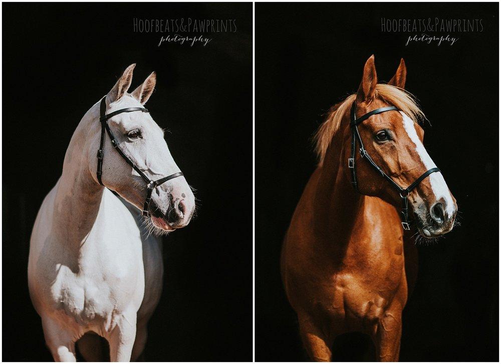fine art horse photographer