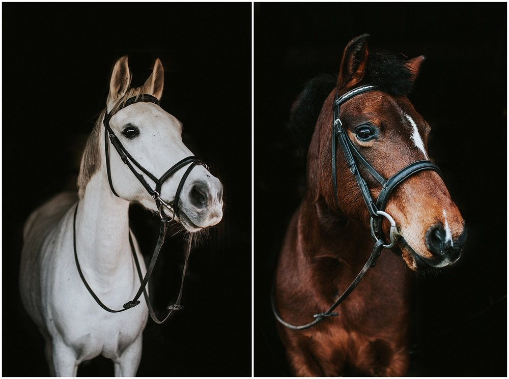 horse photographer in devon