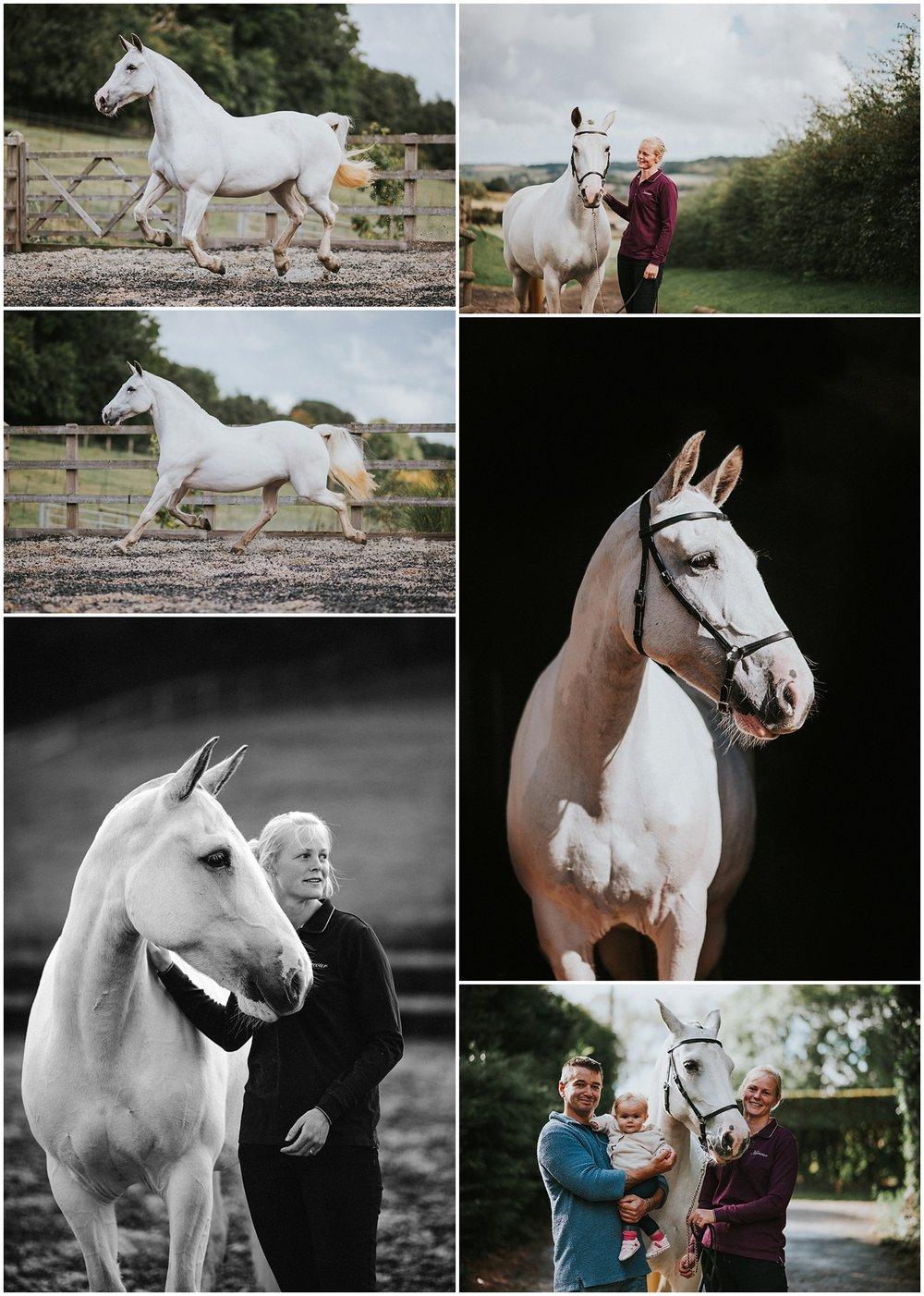 horse photographer kent