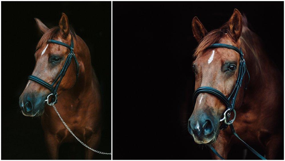 fine art horse portrait