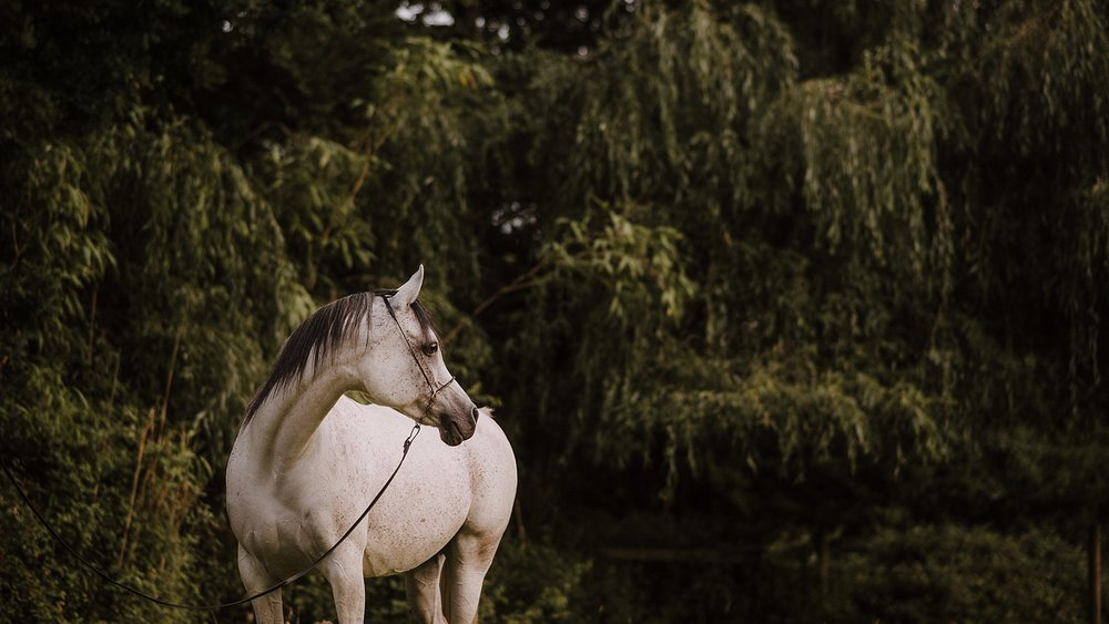 horse photographer surrey