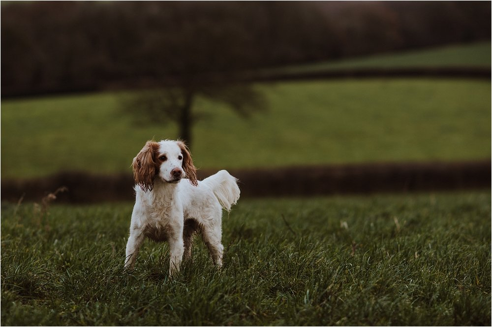 dog photographer in kent