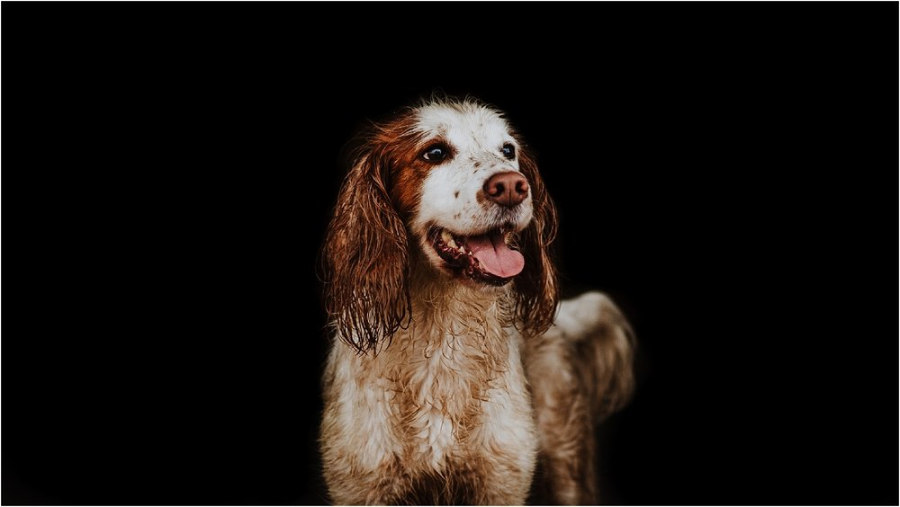 fine art dog photography in london