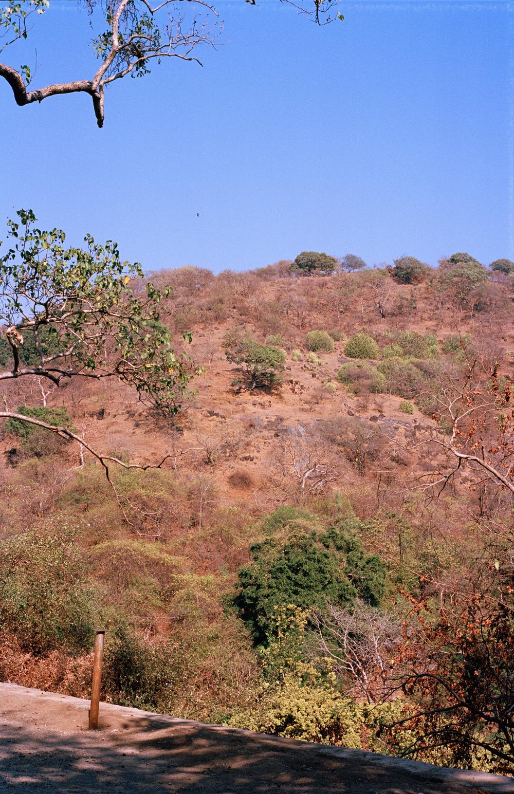 India_Nature.jpg