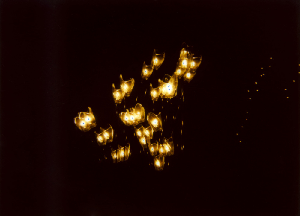 lights bis005.JPG