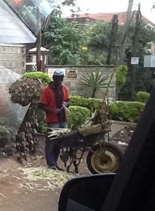 Carving sugar cane