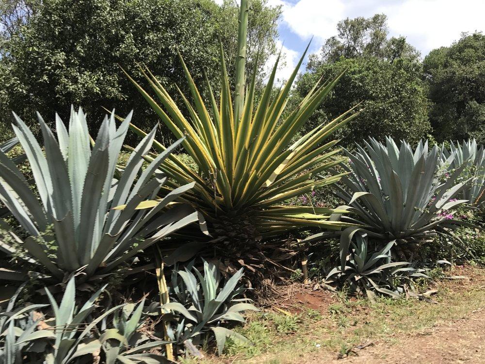 Plants in Karen