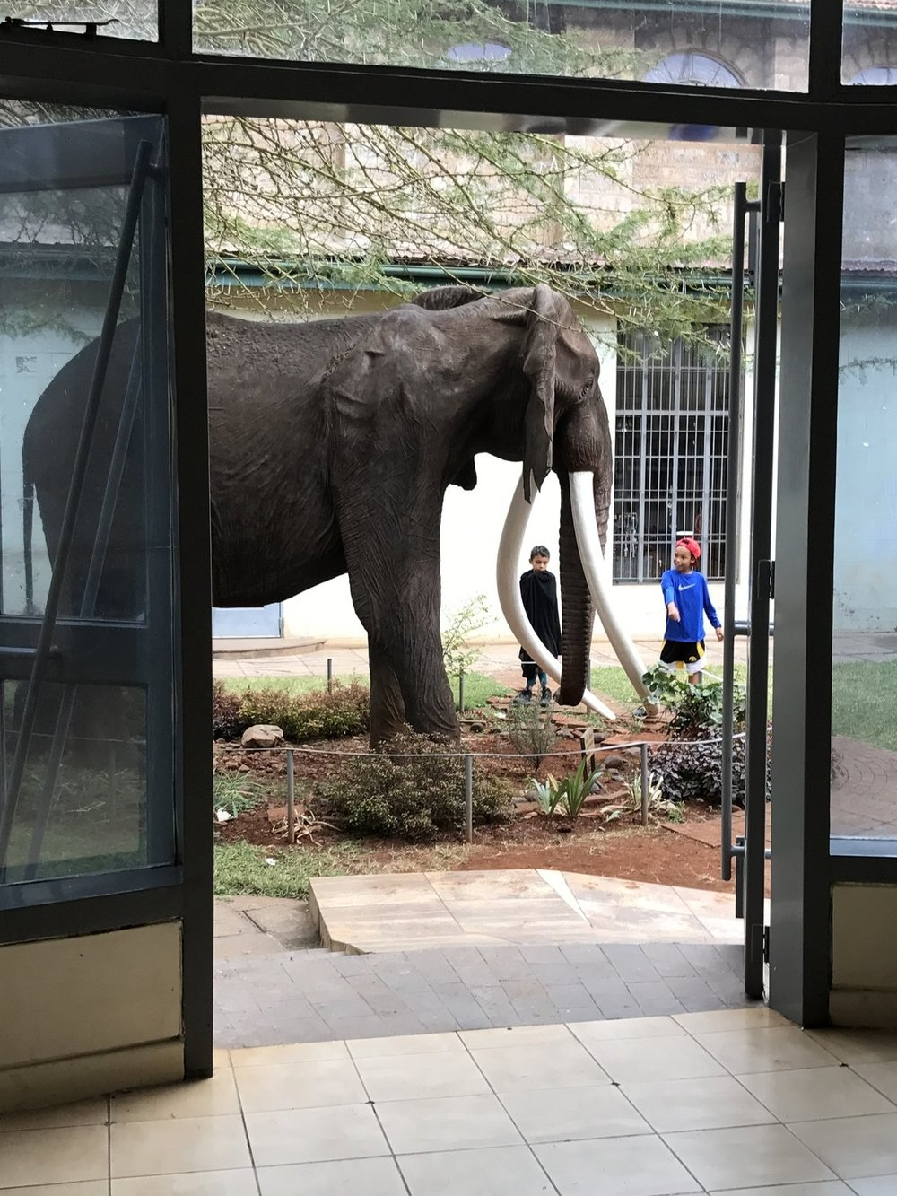 12) Lifelike elephant in museum courtyard