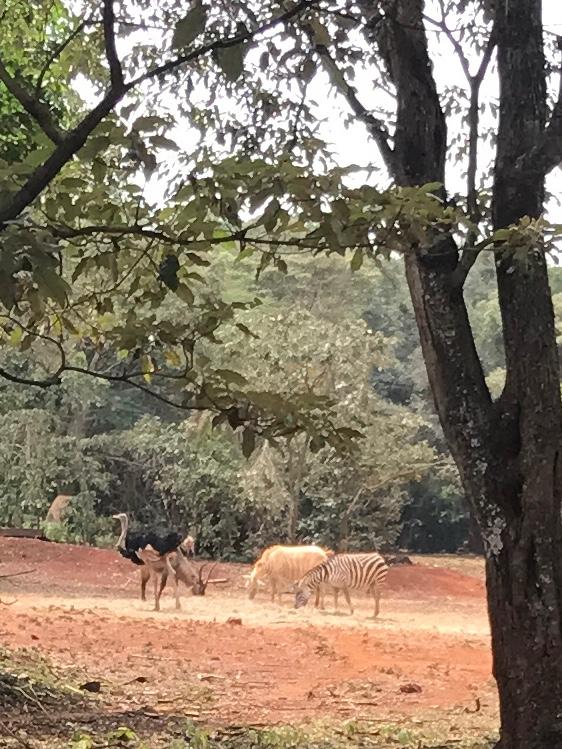 Ostrich, Eland, Albino Zebra, Zebra