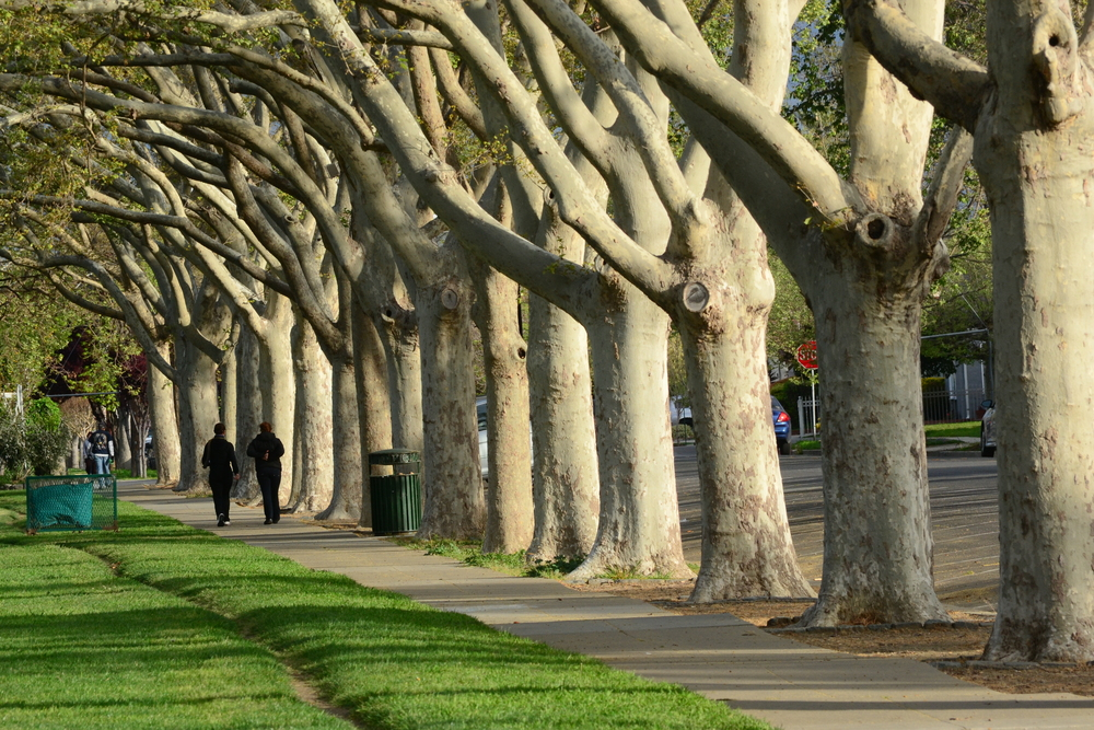 A mature, row of street trees makes a neighborhood inviting.
