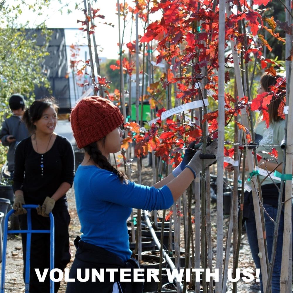 Volunteer With Us this Fall Planting Season!