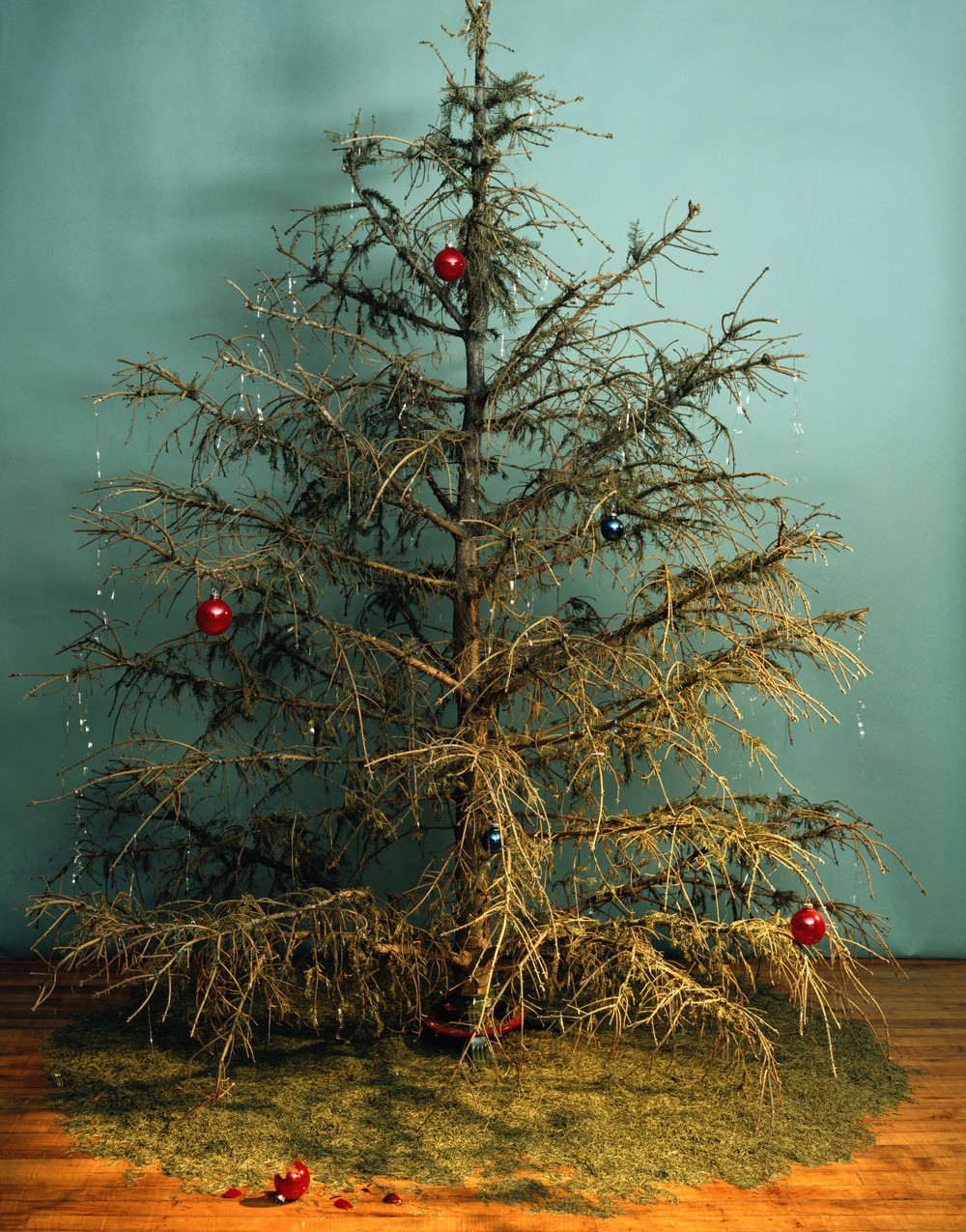 the fate of all holiday trees source