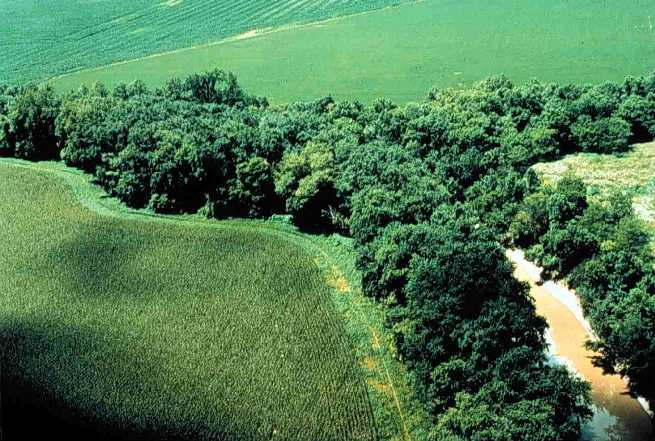 A forest hugs the banks of a river as it winds through farmland. (By U.S. Department of Agriculture - Public Domain, )