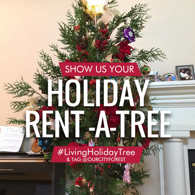 hello 2016 rent a tree participants - Rent A Christmas Tree
