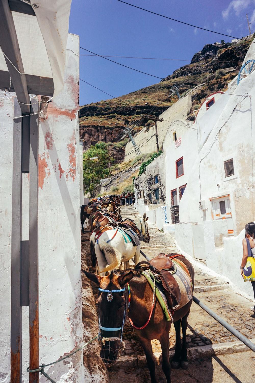 Greece, Santorini, Fira Thira. Donkeys