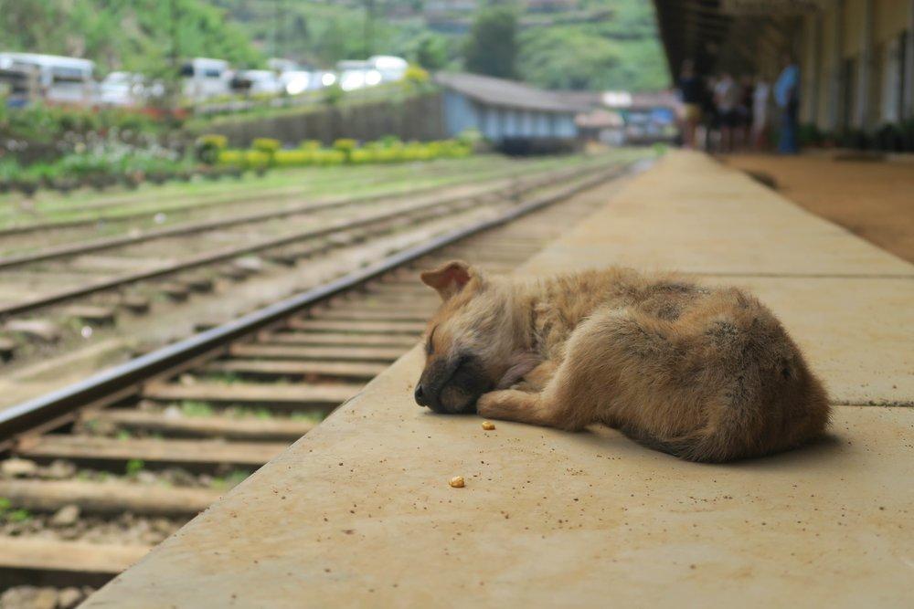 Sri Lanka Train Journey, Nuwara Eliya to Ella