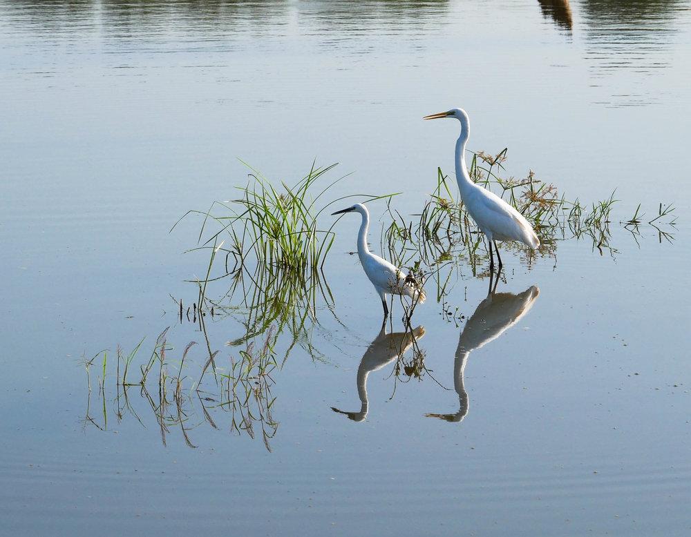Sri Lanka, Wildlife photography