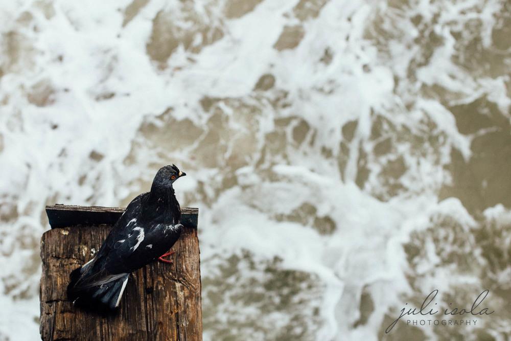 beach_nature_juliisolaphotography (6 of 20).jpg