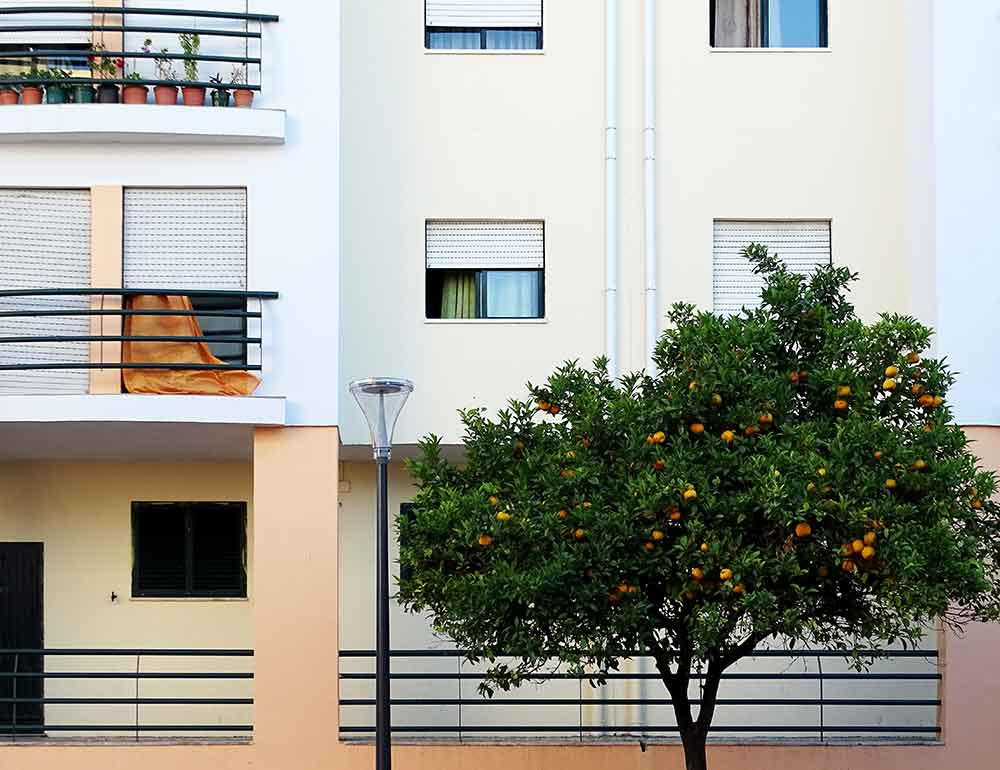 Lisbon's Muita Fruta project boosts sustainability © Caroline Santos