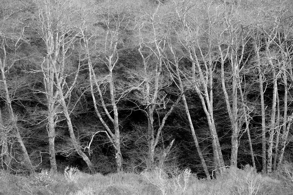 Muir Woods, 2015