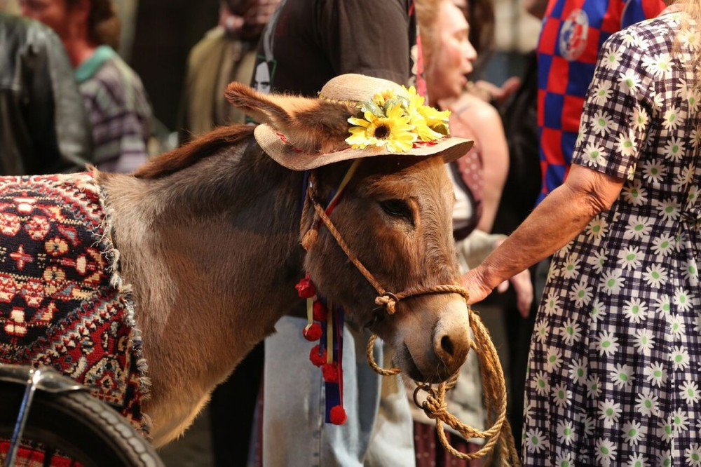 "Sue the donkey in ""Pagliacci"""