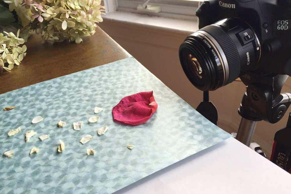 Photographing roses and hydrangeas
