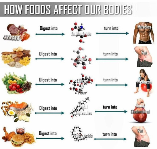 howfoodaffectsourbodies