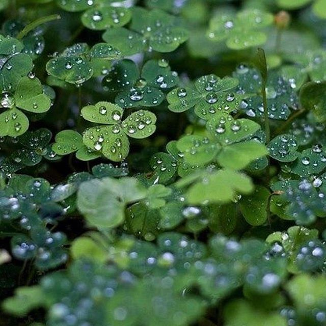 """May the road rise up to meet you. May the wind be always at your back."" - Irish Blessing #stpatricksday2018 #inspiration #motivation #blessing #stpatricksday #clover #fourleafclover"