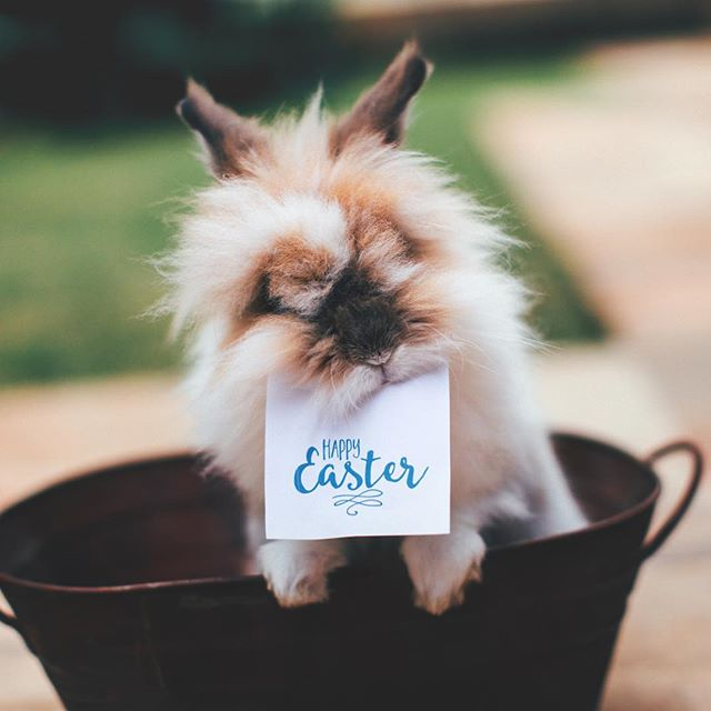 Hoppy Easter everyone! We hope you have a great day with your family.  #easter #bunny #picoftheday #momlife #parenting #healthykids #healthysnacks #healthyfamily #organic #organiclife #organicmom #nongmo #vegan #glutenfree #guiltfreetreat #guiltfreefood #summer #frozenfood #healthytreats #healthy #nourishing #feedfeed #eatclean #nutrition #wellness #nourish #followme