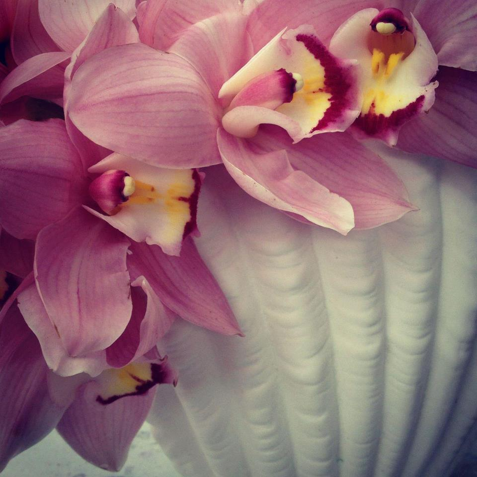 Orchid and vase.jpg