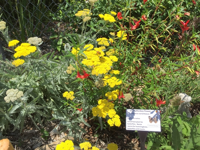 Bees are an important part of pollination for the flowers in our butterfly garden. The elephant seals and other marine mammals enjoy the insects too
