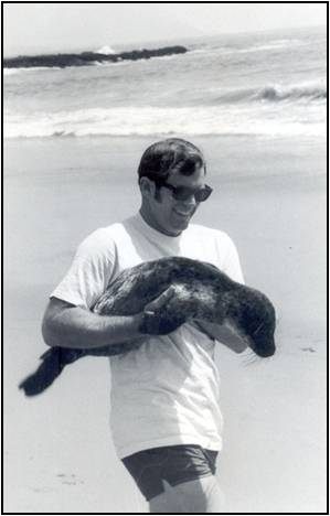 Sea lion rescue in Orange County coastline in California. Beautiful Laguna Beach is called the Riviera of California