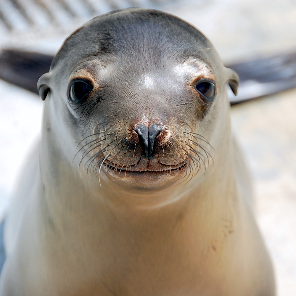 a pool sea lion2.jpg