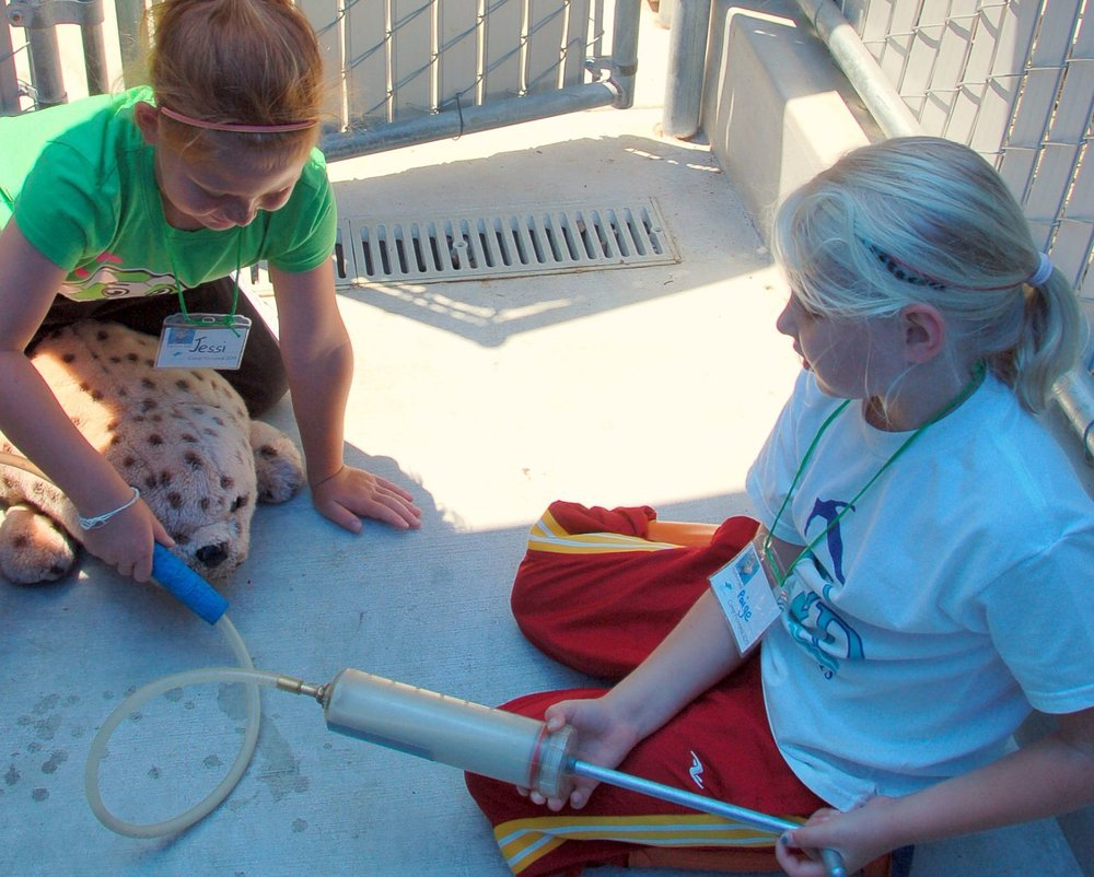 During the program - campers learn steps in rescuing and rehabilitating animals through using equipment in a mock rescue, admit their 'plush' sea lion patient in the hospital after diagnosing its needs and then proceed to making fish smoothie formula which they learn how to administer as part of the rehabilitation effort.