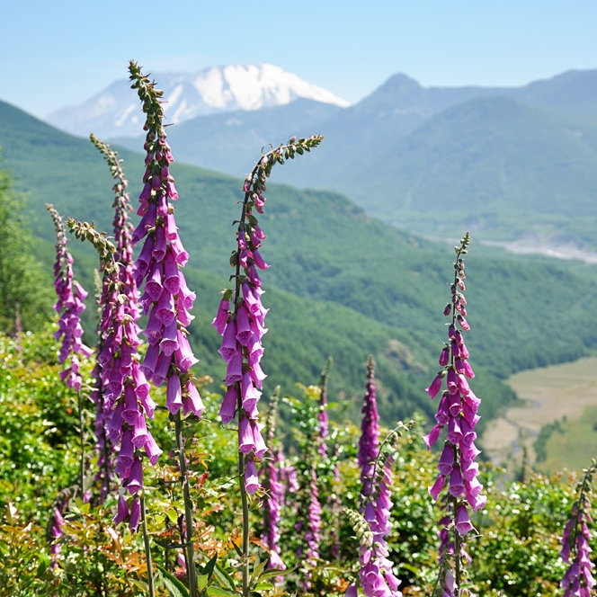 Mt. St. Helens, July 2012