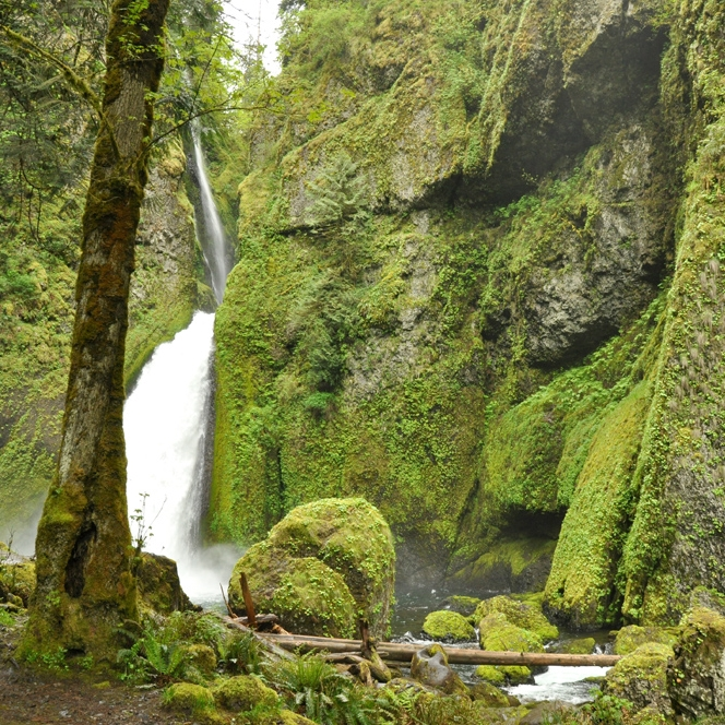 Wahclella Falls, May 2011