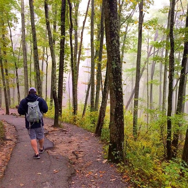 A foggy, rainy, chilly autumn day in the Smokies makes me feel right at home ❤️ #feelslikeoctoberinoregon #pnwonderland #smokymountainnationalpark #westcoasttrees #eastcoastcolors