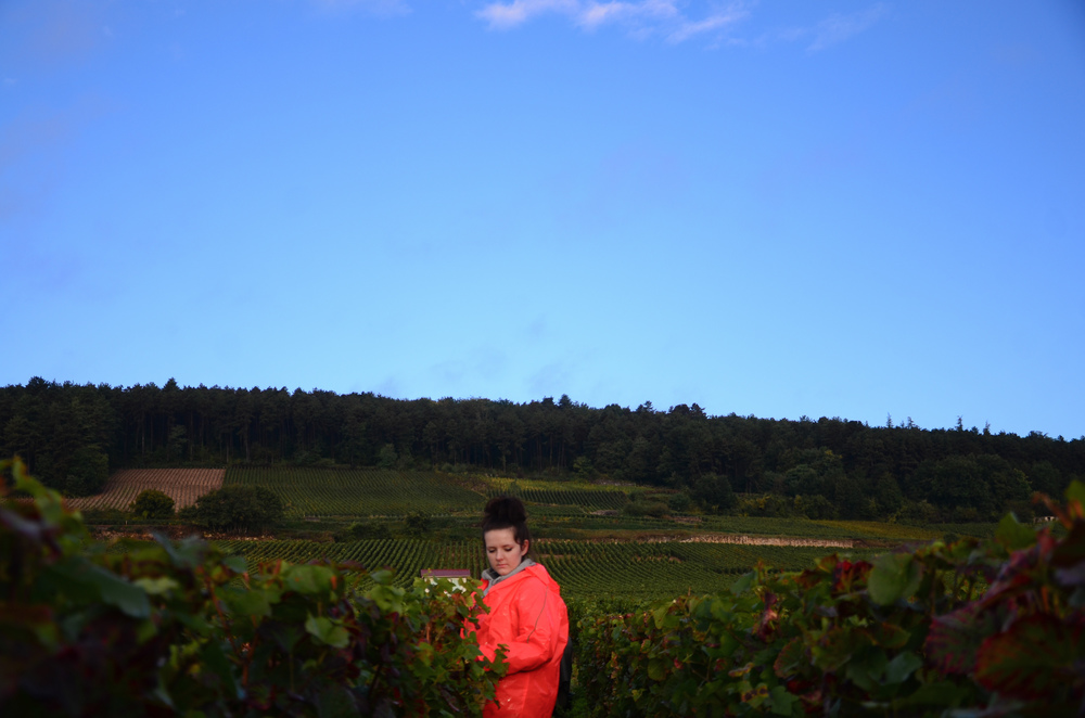 Hungry_Cyclist_Burgundy_Harvest12-64.jpg