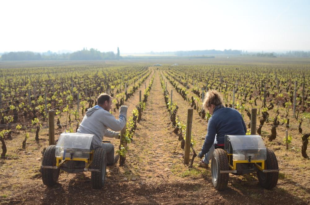 Burgundy11-10.jpg