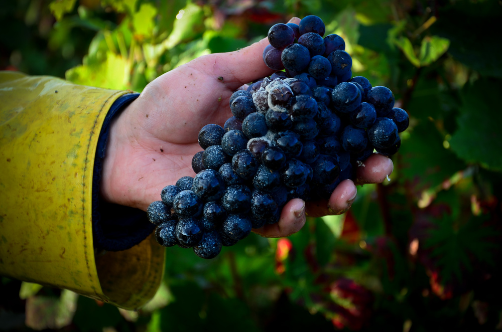 Hungry_Cyclist_Burgundy_Harvest12-76.jpg