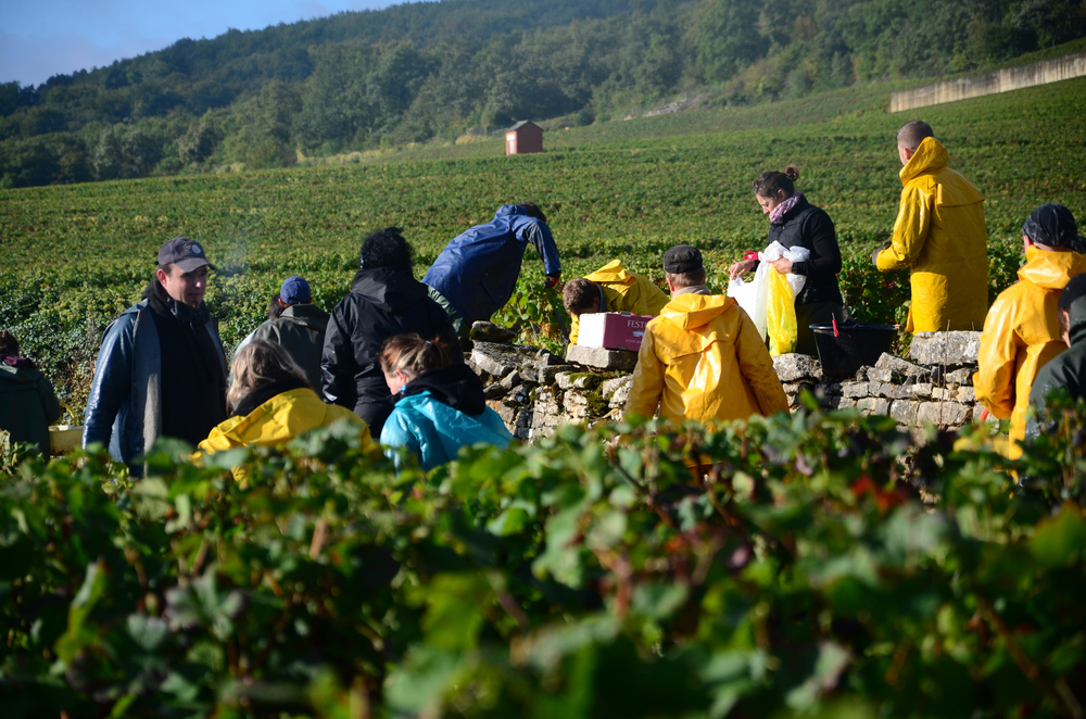 Hungry_Cyclist_Burgundy_Harvest12-105.jpg