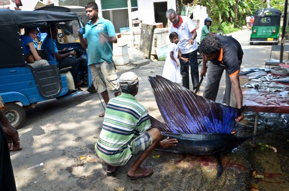 srilanka-31.jpg