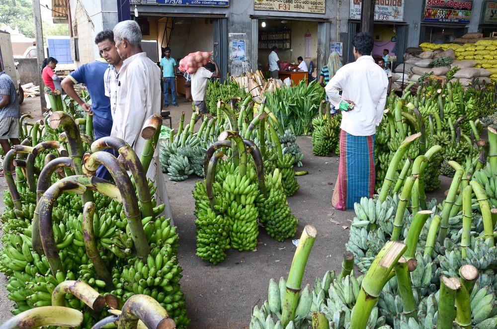 srilanka-63.jpg