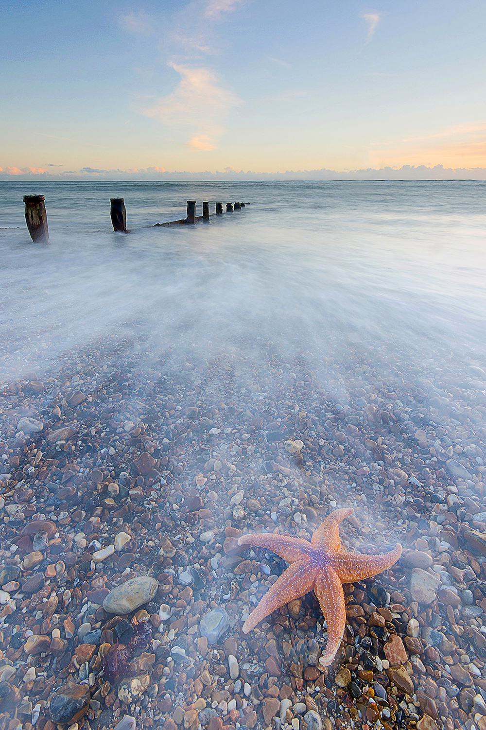 Starfish On Hayling island, UK.jpg