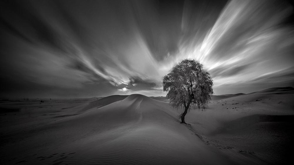 Onederful I - Palm Tree - IR-LE-BW - SZP-JK.jpg